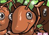 Karınca Çiftliği Kur