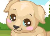 Labrador Köpek Bakımı